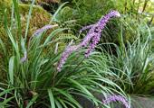 庭園の花1
