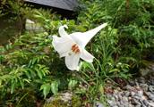 庭園の花2